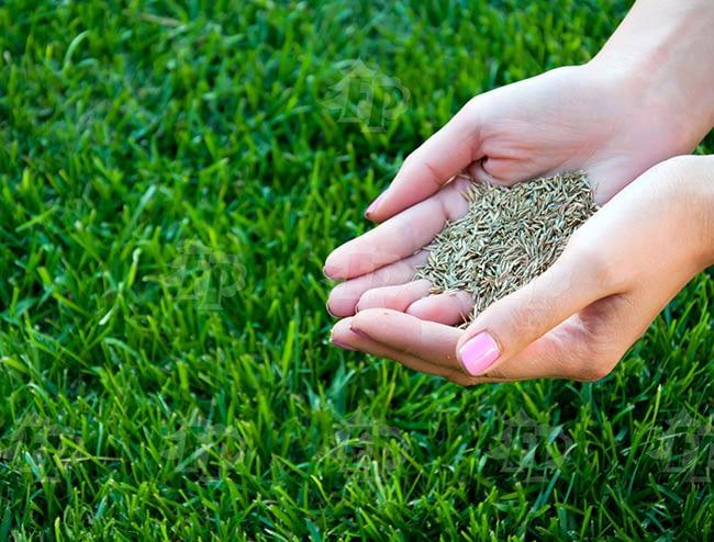 Уход за газоном - осенний подсев газона