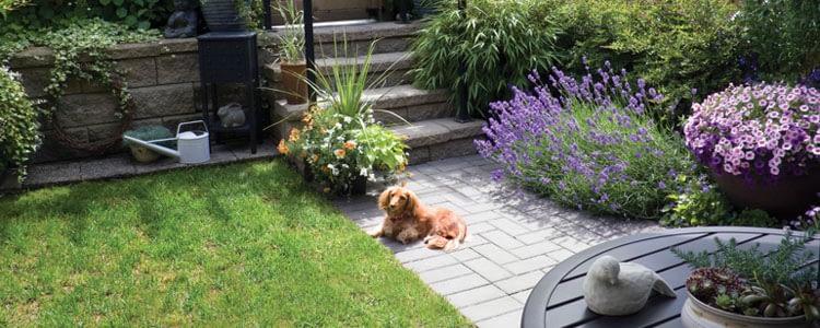 площадка для собаки во дворе