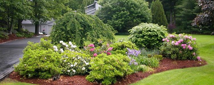 купить растения для двора, купить растения для сада