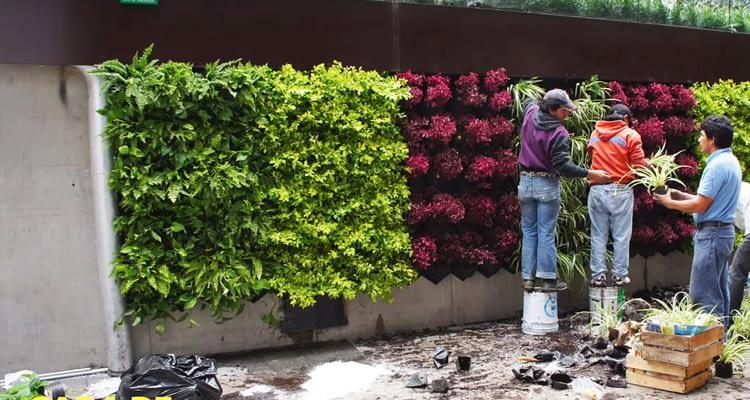 вертикальные сады, зеленые стены, вертикальное озеленение