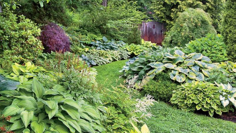 растения для озеленения вашего двора